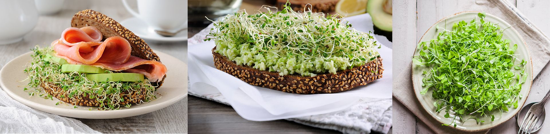 Alfalfa Sprouts Recipe are for reference only.